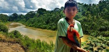 Vermiedene Abholzung in Peru