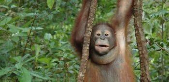 Schutz vor Waldrodung im Rimba Raya Reserve