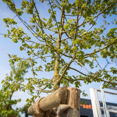 Nachhaltigkeit Bäume gepflanzt